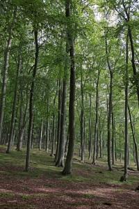 Wald am Schwarzen See - Insel Rügen