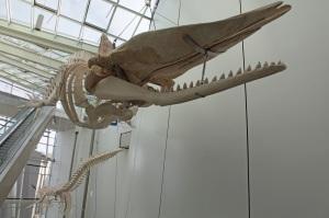 Ozeaneum Stralsund - Skeleton