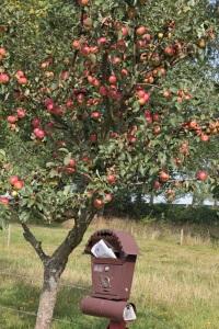 Briefkasten und Apfelbaum in Groß Stresow - Insel Rügen