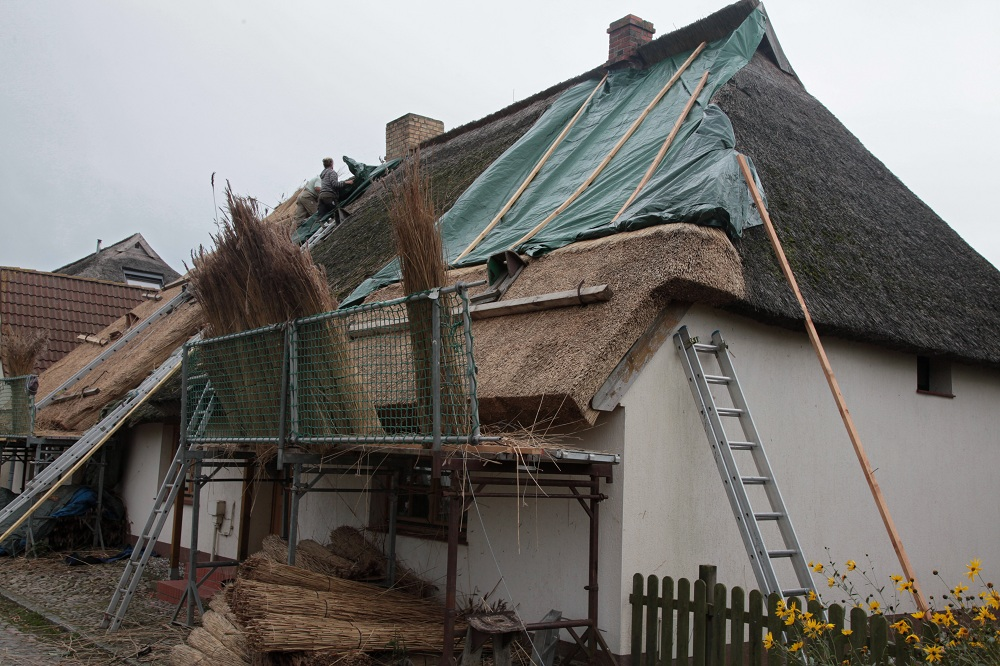 Erneuerung eines Reetdachs in Neureddevitz - Insel Rügen