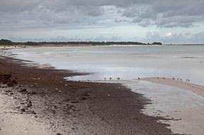 Nordstrand von Darß bei Prerow