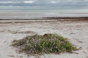 Nationalpark Vorpommersche Boddenlandschaft - Nordstrand von Darß