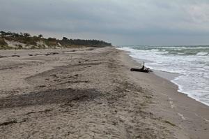 Strand an der Ostseehalbinsel Darß