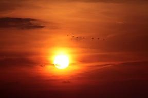 Kraniche fliegen in den Sonnenuntergang bei Prerow - Ostseehalbinsel Darß