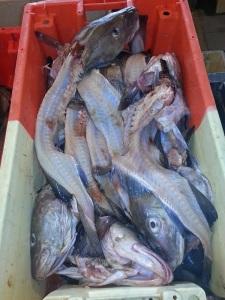 Fischmarkt von Oostende