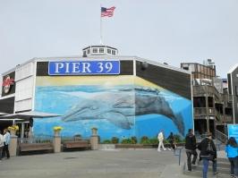 Aquarium am Pier 39 in San Francisco