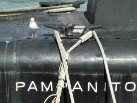 Möwe auf der USS Pampanito