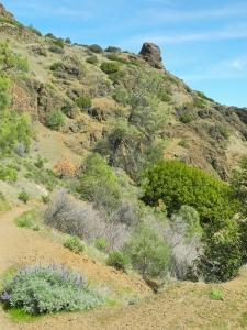 Wanderung auf den Mount Diablo - nahe beim Gipfel