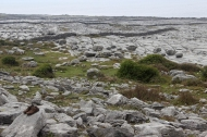 The Burren at Black Head, Ireland