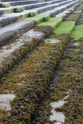 Seaweed on the steps down to the beach in Enniscrone at low tide, County Sligo, Ireland