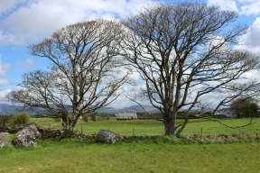 Trees at Carrowmore Megalithic Cemetry, County Sligo, Ireland