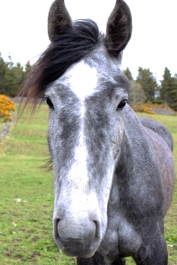 Horse besides the path to Knocknarea Mountain, County Sligo, Ireland