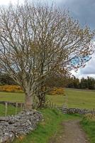Trees on the way back from Knocknarea, County Sligo, Ireland