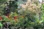 Japanese Gardens - The Irish National Stud - Kildare