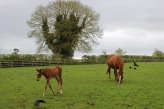 Mare and Foal - The Irish National Stud - Kildare