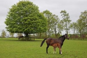 Mare and Foal - The Irish National Stud - Kildare