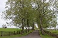 The Irish National Stud - Kildare