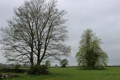 Trees at Duckett's Grove