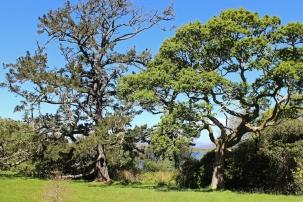 Trees at Bantry Garden, County Cork, Ireland