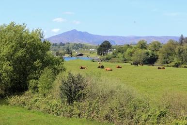 An der N71 zwischen Bantry und Dromkeal - County Cork, Ireland