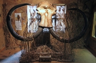 Wooly Mammoth in the Celtic and Prehistoric Museum, Ventry, Dingle Peninsula, Ireland