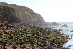 At the Old Pier close to Ballydavid - Dingle Peninsula - Ireland