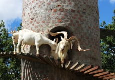 Goatshed, Fairview Wine Estate, Stellenbosch, South Africa