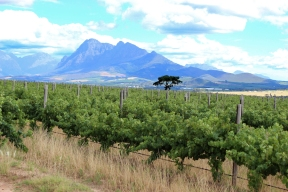 Fairview Wine Estate, Stellenbosch, South Africa