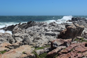 Betty's Bay Penguin Nature Reserve, South Africa