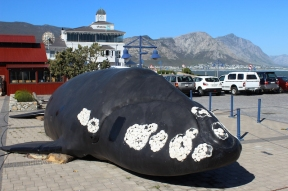 Life size replica whale outside Whaling Museum in Hermanus on Walker Bay, Western Cape, South Africa