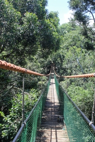 Rope bridge in Monkeyland - South Africa