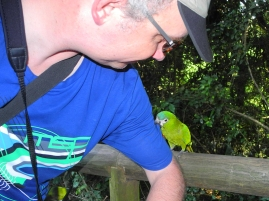 Harald - Red-shouldered macaw (Diopsittaca nobilis) - Hahn's macaw - Birds of Eden - South Africa