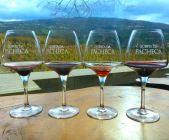 Quinta da Pacheca Wine House Hotel